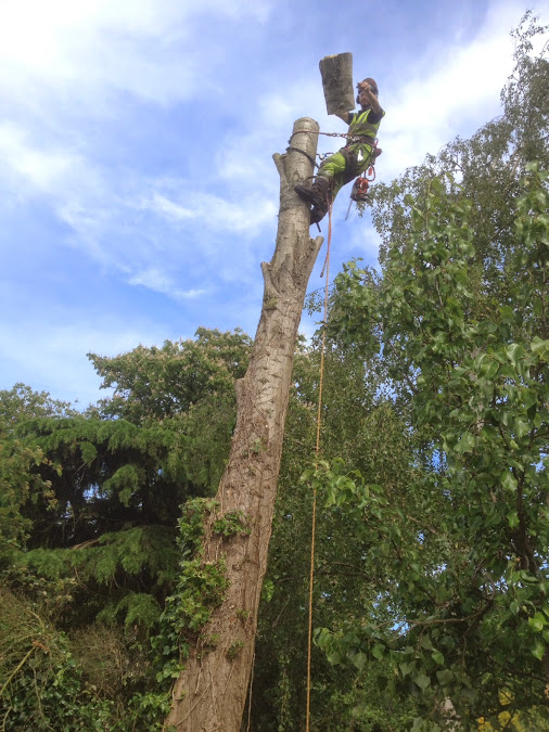Poplar Sectional Take-down