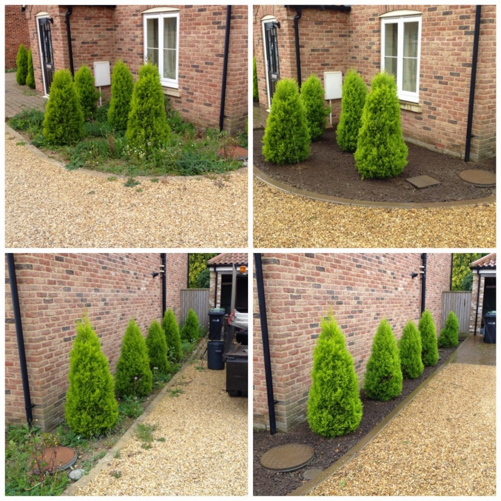 Garden maintenance aspect tree garden services for Tree and garden services